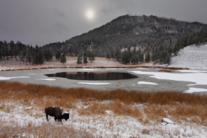 yellowston winter